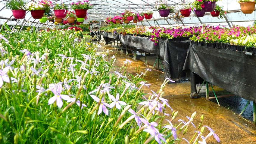 service-plantes