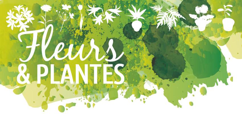 visuel-fleurs-plantes